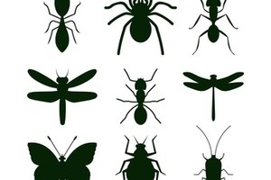 Против мравки 2