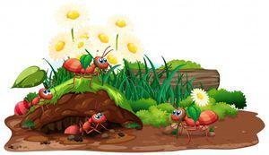 Препарат против мравки 1