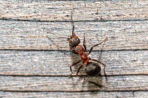 Препарат против мравки в апартамента 1 - вредители