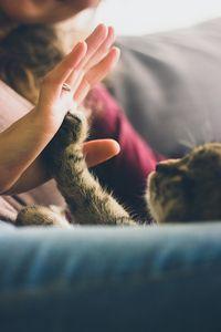 Как да се отървем от бълхи вкъщи 1 - коте