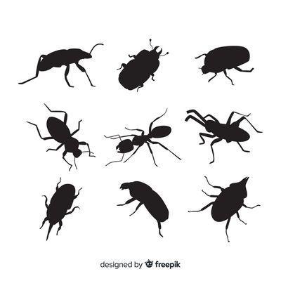Пръскане против кърлежи 2 - картинка на буболечки