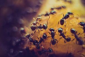 Препарат против мравки в къщи 1