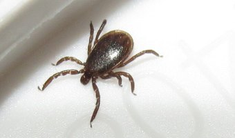Lyme Disease:  What it is and How to Avoid it