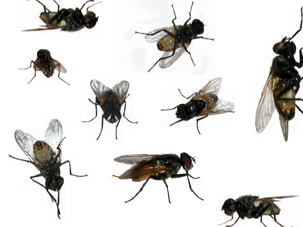 The Control Of Flying Insects House Fly