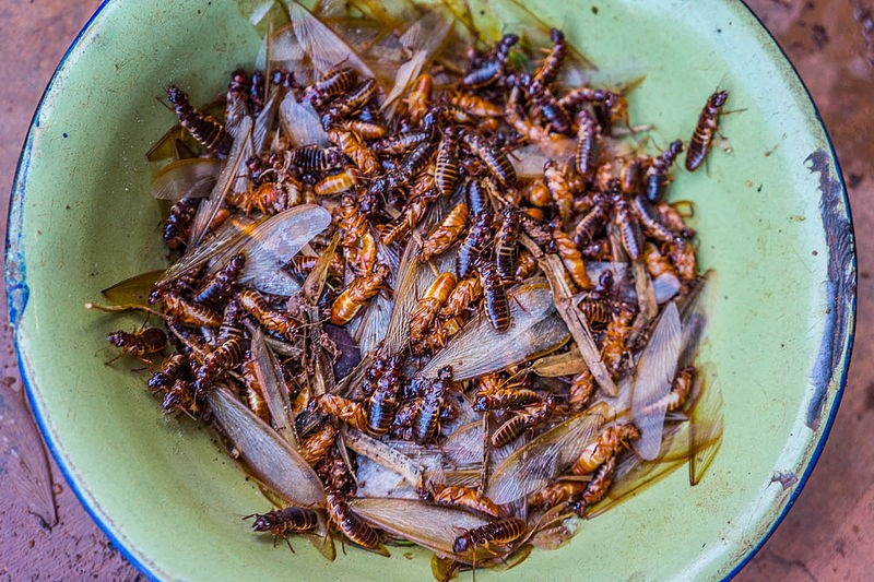 Going Buggy Cooking up a World of Insects at Home