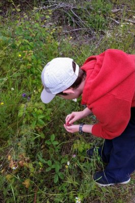 Picking wild raspberries.