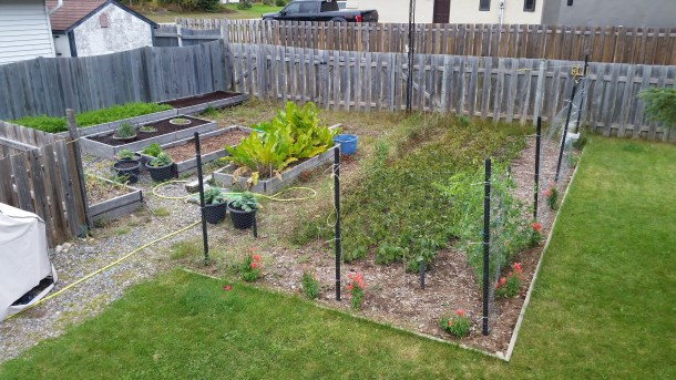 The garden as of September 25th. It needs a lot of work.