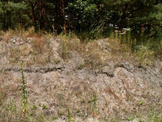Miejsce gniazdowania - leśny parking na tuszyńskim Młynku