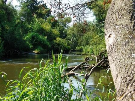Bolimowski Park Krajobrazowy rzeka Rawka - habitat