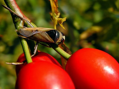 Widzew 03.10.2010 Podczas przelotu pomiędzy zbiornikami krótki odpoczynek na krzewie dzikiej róży