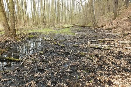 Habitat - Struga Dobieszkowska w pierwszej połowie kwietnia