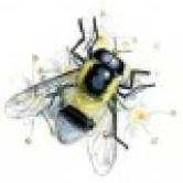 Insektarium