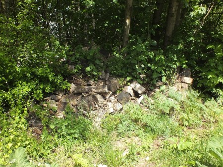 13.05.2015 Rozrzucone drewno, w zakamarkach którego odnalazłem prężną populację Raglius alboacuminatus