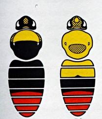 B.pratorum - Samiec