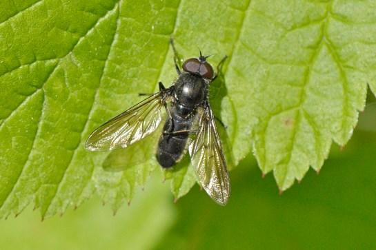 ch.variabilis.