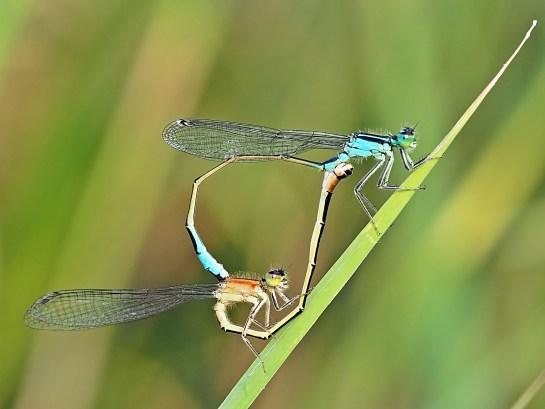 i.elegans