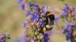 Rudniki 06.08.2019 Fot. Dzikie Pszczoły