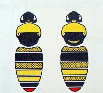 B.flavidus - Samiec