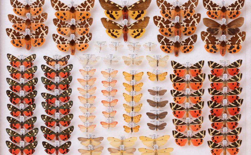 Verborgene Schätze – Eine Führung in der Insektensammlung des Naturhistorischen Museums Bern