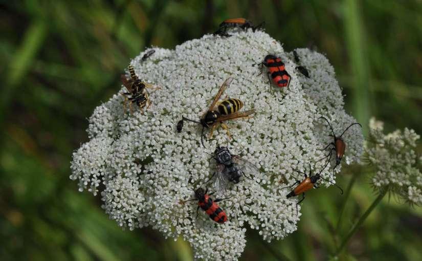 Schweiz: Artenvielfalt und Biodiversität kommen zu kurz