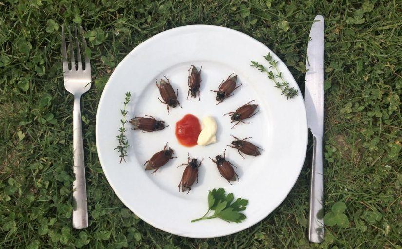 Ein Jahr Insekten essen: Die Regale sind leer