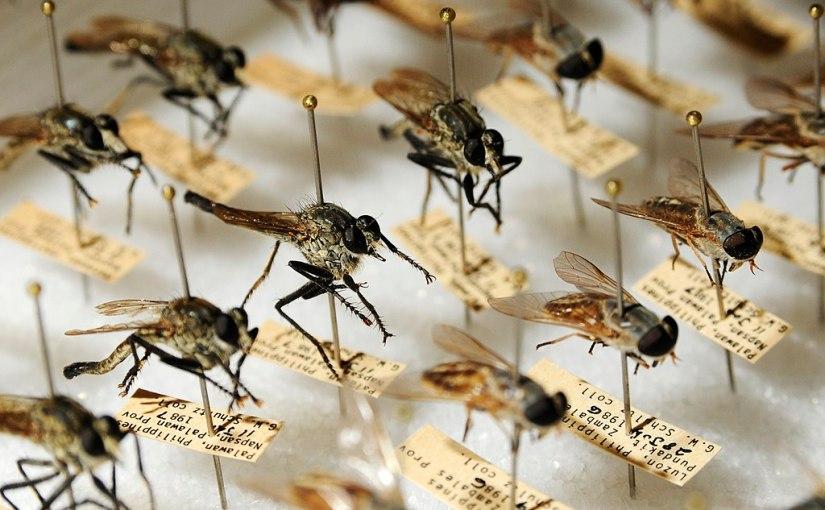 Entomologische Sammlungen im Dienste der Wissenschaft