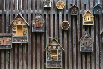 Sinn und Zweck von Insektenhotels