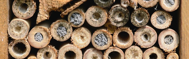 Bambusröhrchen für Insektenhotel