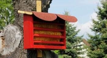 Insektenhotel gegen Blattläuse