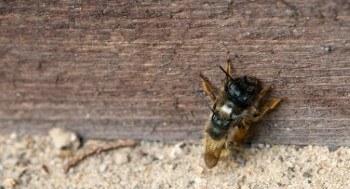 Welches Holz für Insektenhotel