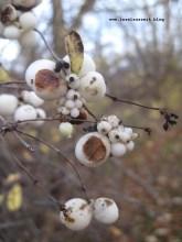 mon-herbst-winter-2016-17-rund-ums-feld-nordoestlich-von-bakkegaard-001