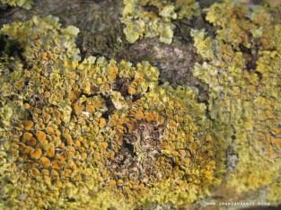 mon-herbst-winter-2016-17-rund-ums-feld-nordoestlich-von-bakkegaard-062