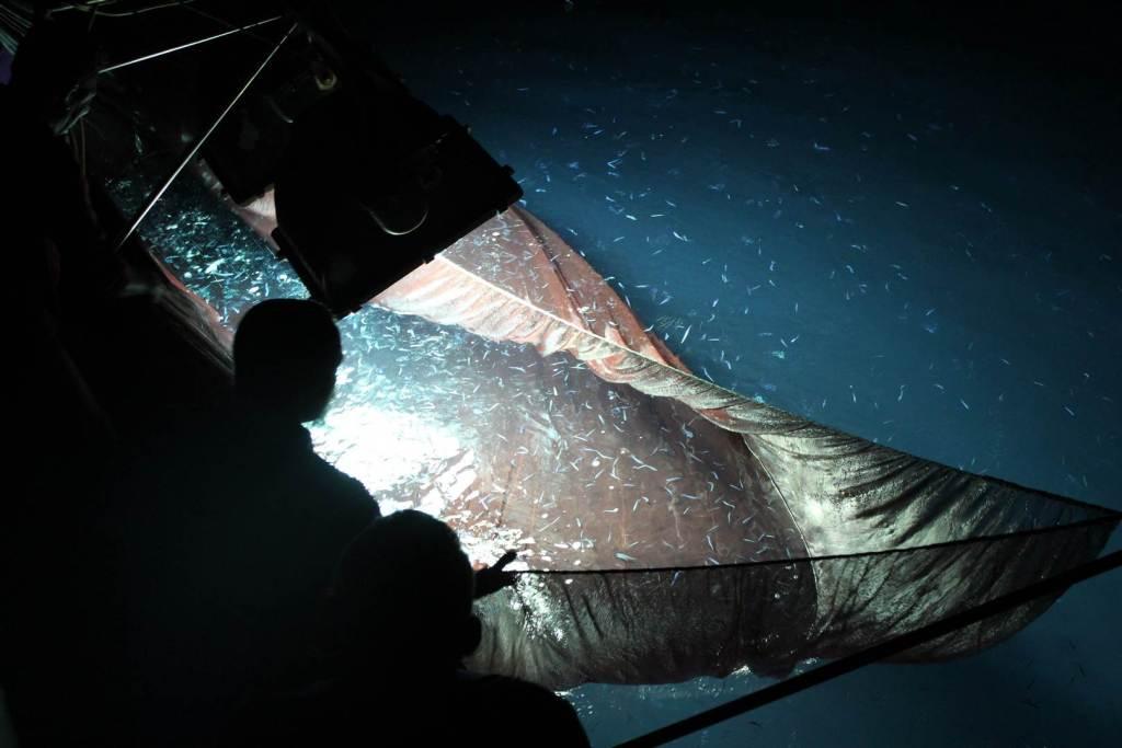 malediven-fischen-1
