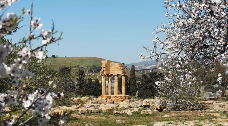 agrigento tempio dioscuri in fiore