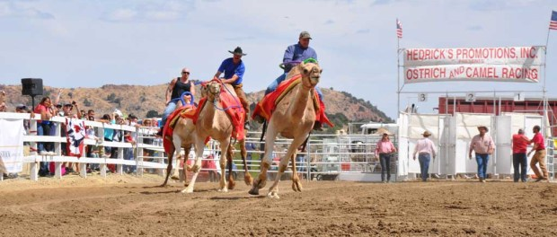 "Das ""Camel Race"" in Virginia City. - Foto: Nevada Commission on Tourism"