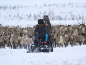 Canadian Arctic Reindeer Signature Package. - Foto: Tundra North Tours
