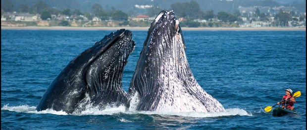 Whale Watching in Santa Cruz. - Foto: Paul Schraub