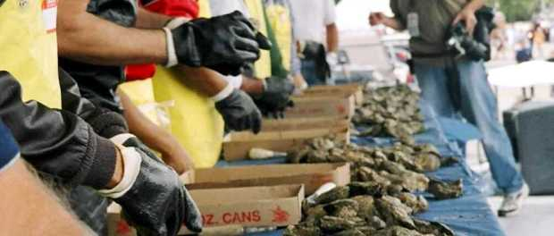 Oyster Contest. - Foto: Discover Long Island