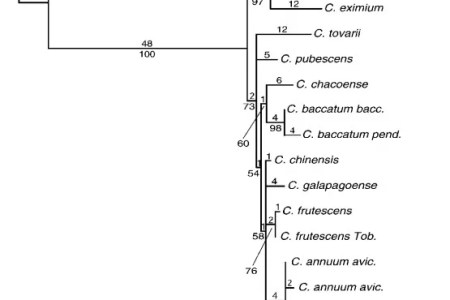 phylogénétique of capsicum chili pepper species phylogenetic