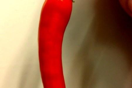 Faire pousser des piments en appartement grâce à l'hydroponie