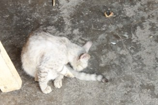 This kitty seems to be a dominant one, as he/she keeps fighting any cat that comes his/her way