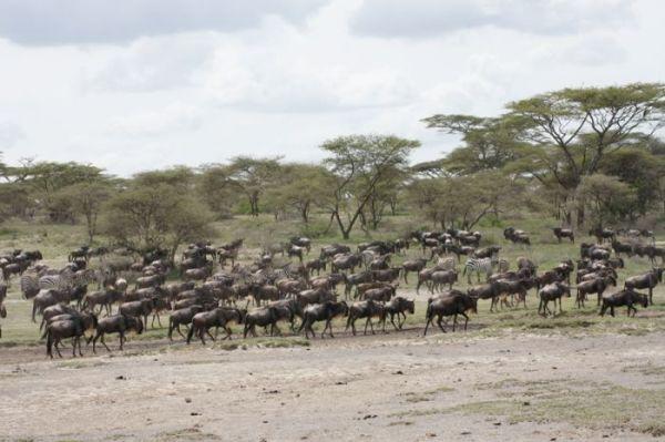 5 Days safari Ngorongoro/ Serengeti/ Manyara