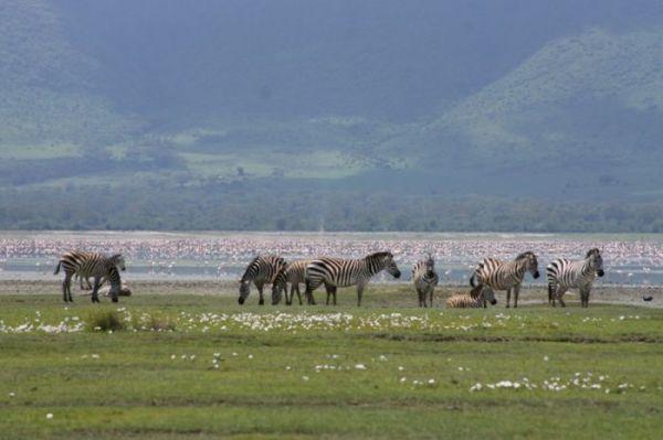 5 Nights - 6 Days Manyara Ngorongoro Tarangire