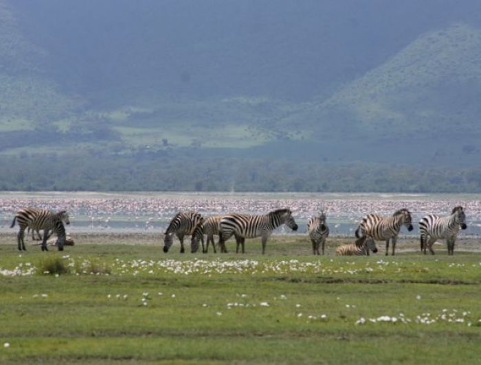 Zebra in Lake Manyara, Tanzania