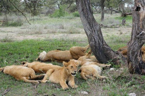 2-Days-Ngorongoro-National-Park