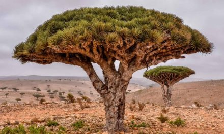 Is the UAE Gearing Up to Annex Yemen's Socotra Island?