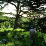 Woodlands of the Middle East: Missing the Forest for the Trees