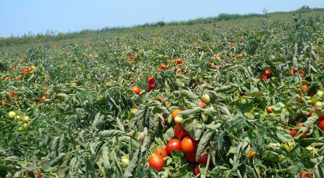 Farmers, Agro-industrialists, Others Demand Simple Procedures in Agric Financing