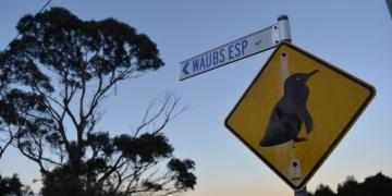 Tasmanie, roadtrip, Australie, Hobart, Bicheno, Launceston