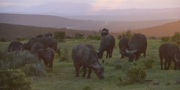 Een lange rit naar het zuiden, op bezoek bij Addo Elephant Park